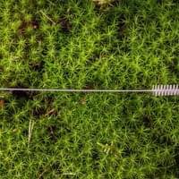 kartáček na čištění bambusových brček