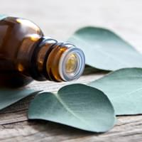 Eucalyptus leaves and oil close up against a wooden background